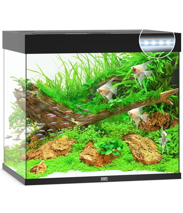 juwel aquarium lido 200 led dehner. Black Bedroom Furniture Sets. Home Design Ideas