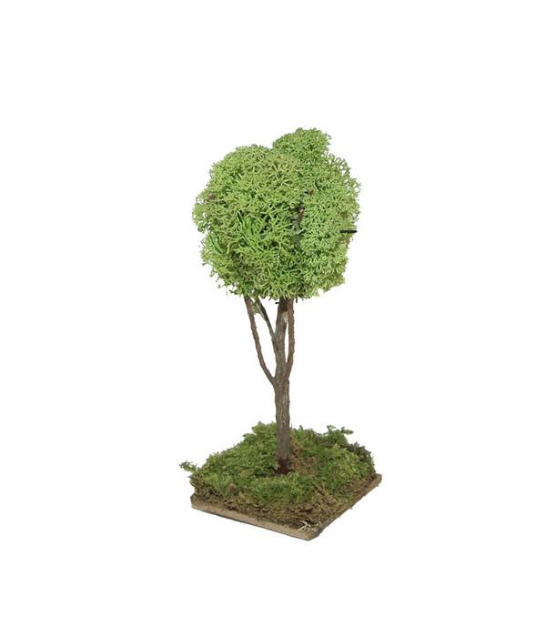 Kolbe Baum, 16 cm | Dehner