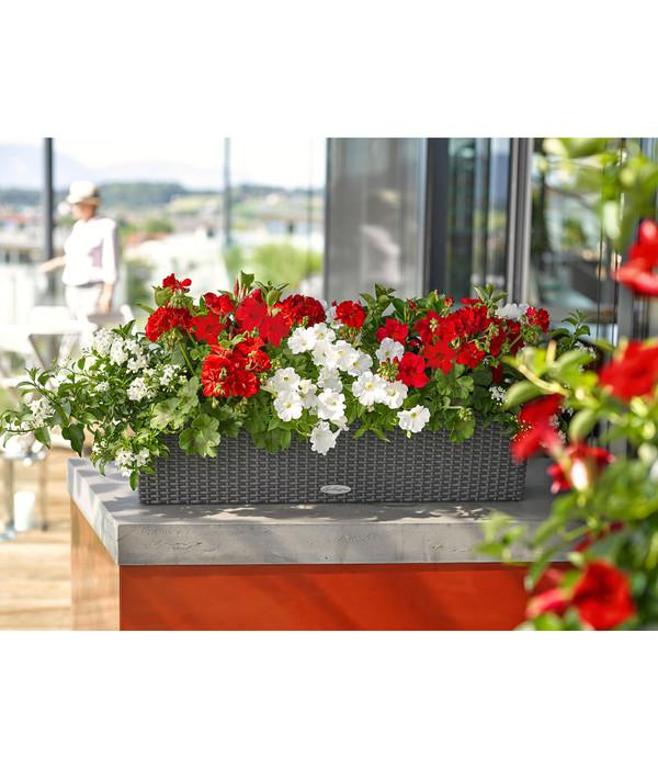 lechuza blumenkasten balconera cottage rechteckig dehner. Black Bedroom Furniture Sets. Home Design Ideas