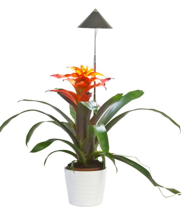 led pflanzenlampe dehner. Black Bedroom Furniture Sets. Home Design Ideas