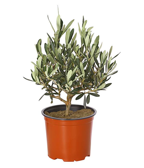 olive busch dehner. Black Bedroom Furniture Sets. Home Design Ideas