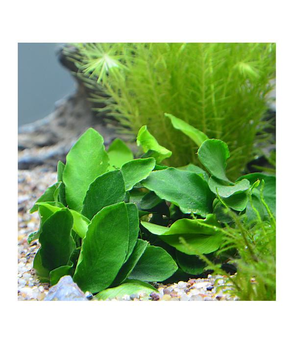 planet plants 20er set 7 bund 2 topf aquarium pflanzen dehner. Black Bedroom Furniture Sets. Home Design Ideas