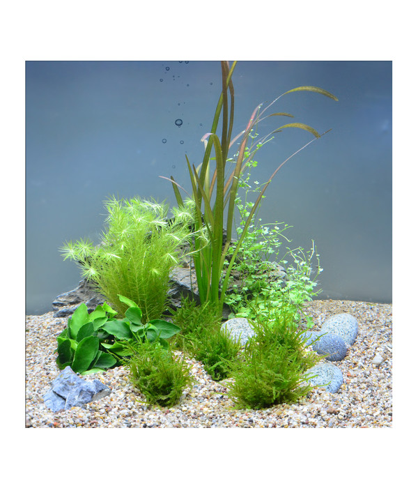 planet plants 20er set 7 bund 2 topf aquarium pflanzen dehner. Black Bedroom Furniture Sets. Home Design Ideas