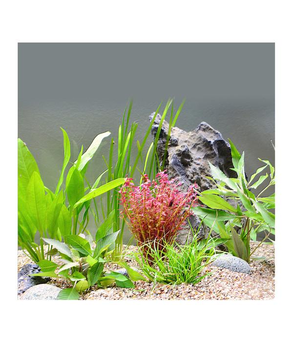 Planet plants 30er set bund topf aquarium pflanzen dehner for Aquarium pflanzen