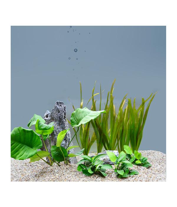 planet plants 60er set bund topf aquarium pflanzen dehner. Black Bedroom Furniture Sets. Home Design Ideas