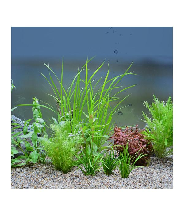 planet plants 60er set bund aquarium pflanzen dehner