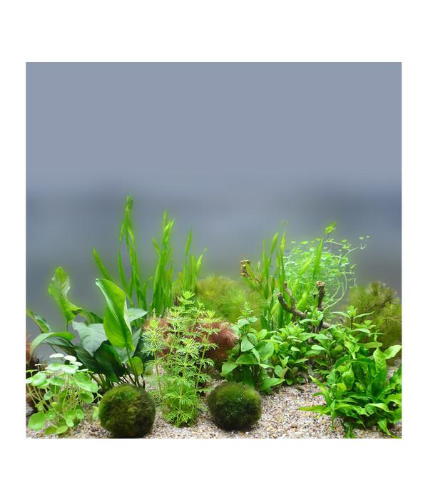 Planet Plants 80er Set Bund Topf Holz Aquarium Pflanzen Dehner