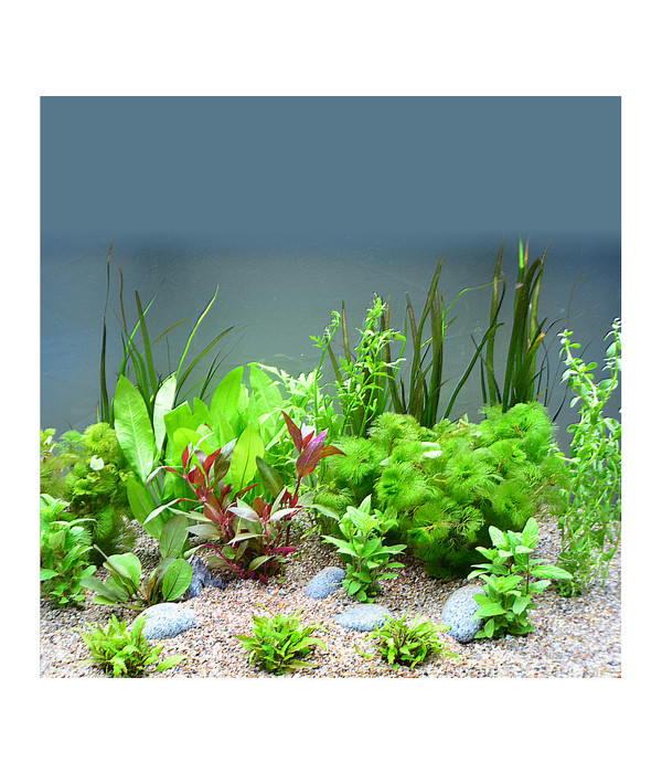 planet plants s damerika 120er set aquarium pflanzen dehner. Black Bedroom Furniture Sets. Home Design Ideas
