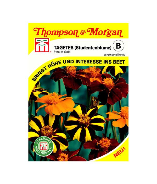 thompson morgan samen tagetes 39 pots of gold 39 dehner. Black Bedroom Furniture Sets. Home Design Ideas