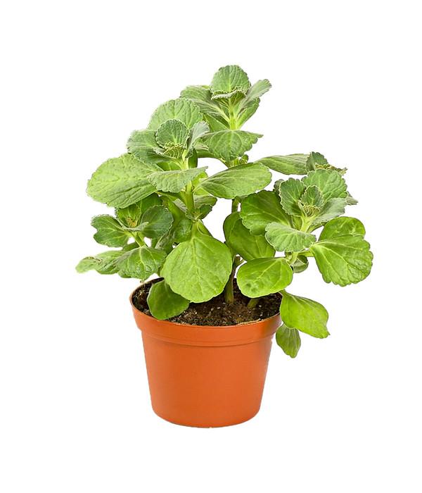 pflanze verpiss dich bunte 39 verpiss dich 39 pflanze von g rtner p tschke verpiss dich. Black Bedroom Furniture Sets. Home Design Ideas