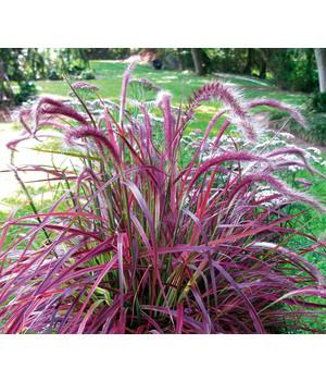 Gartengräser Winterhart gräser pflegeleicht und winterhart für den garten dehner