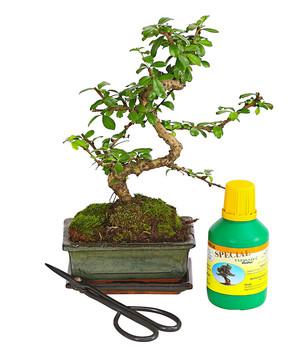 prachtvolle pflanzen online bestellen dehner. Black Bedroom Furniture Sets. Home Design Ideas