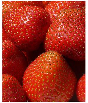 Erdbeerpflanzen Sollten In Keinem Garten Fehlen Dehner