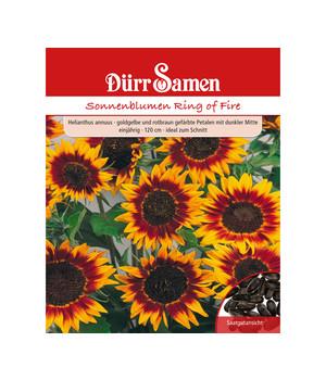 Kiepenkerl Sonnenblume 3599 *Fantasia F1* pollenfreie Blüten lange Blütezeit