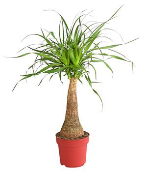 Palme Für Drinnen mit grünpflanzen eine grüne oase schaffen dehner