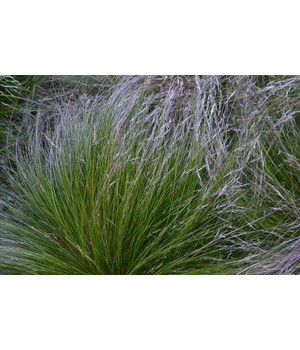 Garten Gräser gräser pflegeleicht und winterhart für den garten dehner