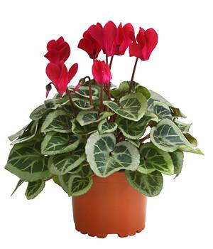 Terrassenpflanzen Fur Ein Blumenparadies Dehner