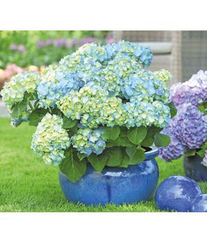 Blühende Sträucher Für Ihren Garten Dehner