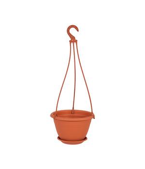 Oregano Balkonpflanze Pflanzen Kräuter Blumen für eine Pflanzenampel Hängeampel