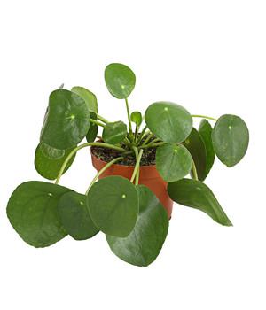 Zimmerpflanzen Sonnenfenster zimmerpflanzen in bester qualität dehner