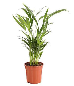 Mit Grunpflanzen Eine Grune Oase Schaffen Dehner