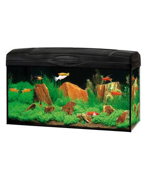 Gute Wahl Aquarien Set Scout, 54 Liter