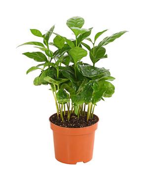 Mit Grünpflanzen eine grüne Oase schaffen   Dehner