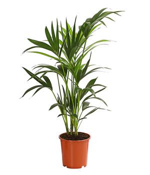 Gemeinsame Mit Grünpflanzen eine grüne Oase schaffen | Dehner #PH_75
