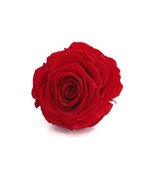 Konservierte Rosen Täuschend Echt Dehner