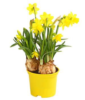 Bluhende Zimmerpflanzen Beste Qualitat Dehner