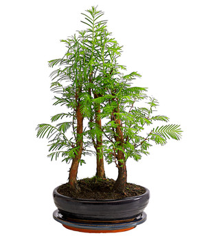 Moderne Grünpflanzen zimmerpflanzen in bester qualität dehner