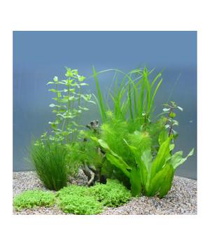 die sch nsten aquariumpflanzen jetzt online entdecken dehner. Black Bedroom Furniture Sets. Home Design Ideas