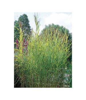 Teichpflanzen - für einen Ruhepol im Garten | Dehner
