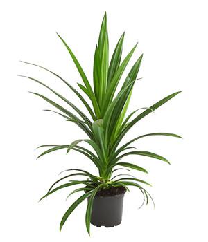Prächtig Mit Grünpflanzen eine grüne Oase schaffen | Dehner #ES_81