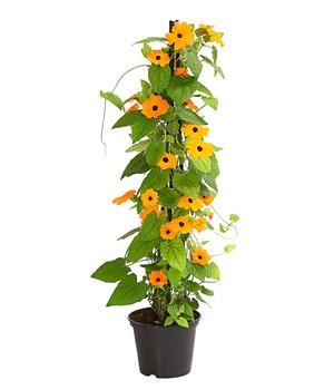 Terrassenpflanzen Für Ein Blumenparadies Dehner