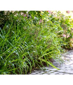 Winterharte Ziergräser gräser pflegeleicht und winterhart für den garten dehner
