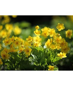 Bodendecker Efeu Pflegeleichte Pflanzen Dehner