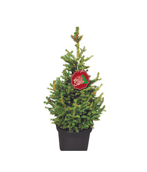 Weihnachtsbaum kaufen trier