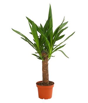 Zimmerpflanzen in bester Qualität   Dehner