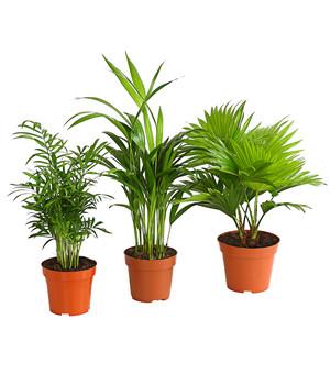 Zimmerpflanzen In Bester Qualitat Dehner