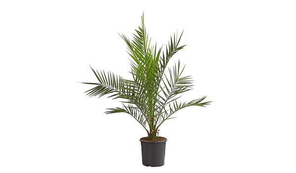 Sommer Unter Palmen Vielfalt Erleben Dehner