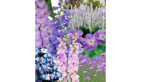 Prachtstauden Für Blütenspektakel Im Garten Dehner