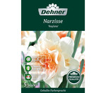 Dehner Premium Blumenzwiebel Narzisse 'Replete'